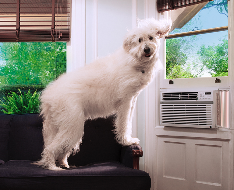 A dog is perched on a chair, leaning into a window AC unit.