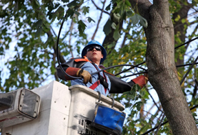 A Con Edison employee working in a bucket truck to repair overhead power lines.