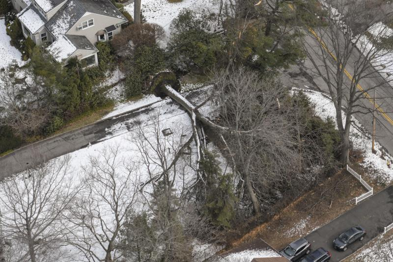 An aerial view of fallen tree in a suburban neighborhood.