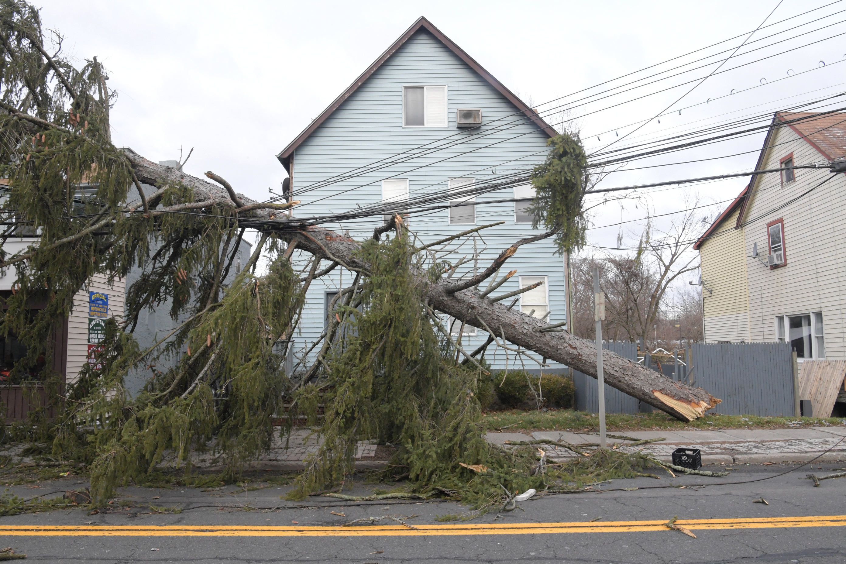 A evergreen tree has fallen on wires, as part of the damage of Winter Storm Riley