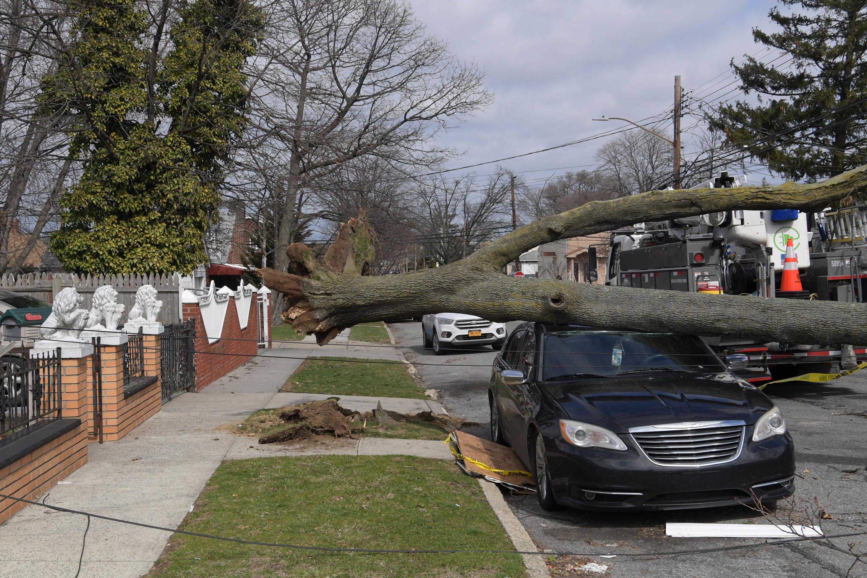 A tree has fallen onto a car, on a residential street