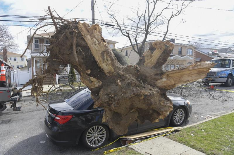 An uprooted tree fallen on a car, in a residential street.
