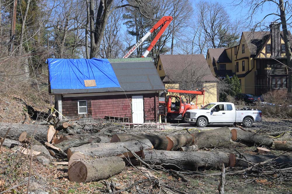 A fallen tree has been sawed into many pieces, as part of the Riley-Quinn restoration efforts.