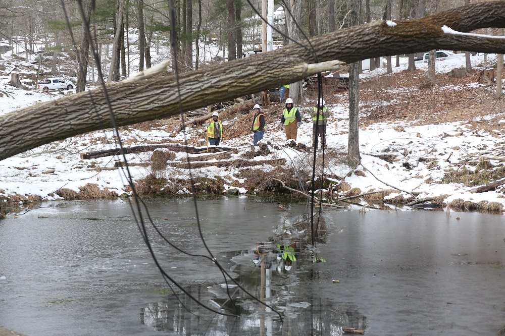 A large tree has fallen on power lines and is suspended above a pond.