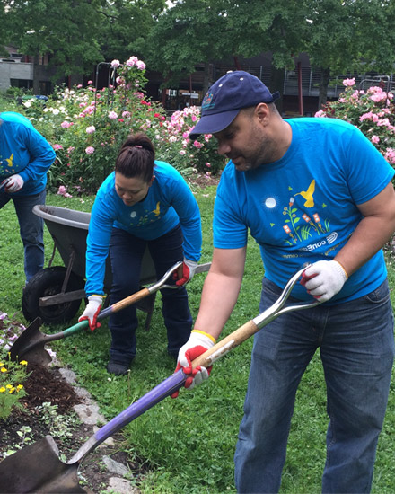 A group of Con Edison volunteers are tending garden beds.